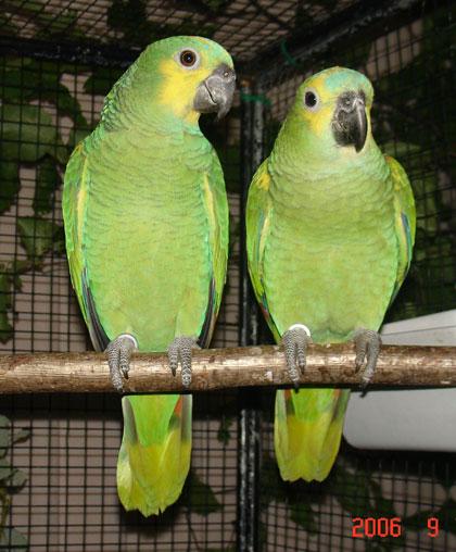 Les Amis Des Oiseaux